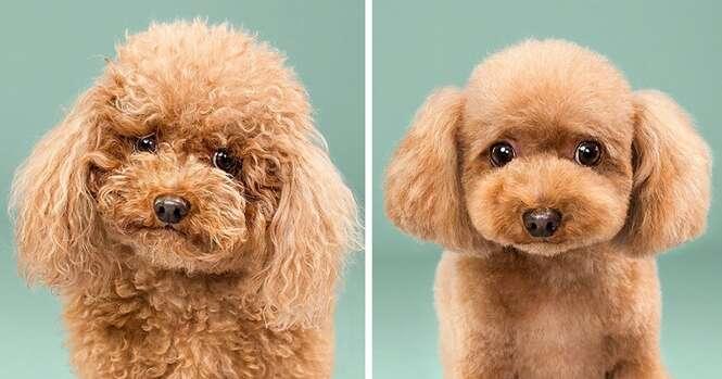 Cães antes e depois de cortarem as madeixas