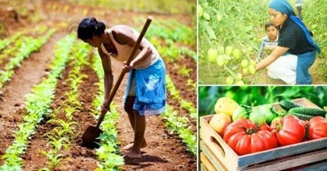Estudante ensina agricultura sustentável para mães solteiras sobreviverem no México