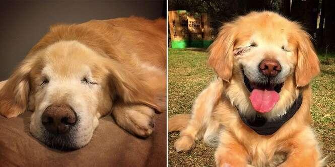 Cão que nasceu sem olhos e com nanismo passa seus dias visitando crianças com necessidades especiais