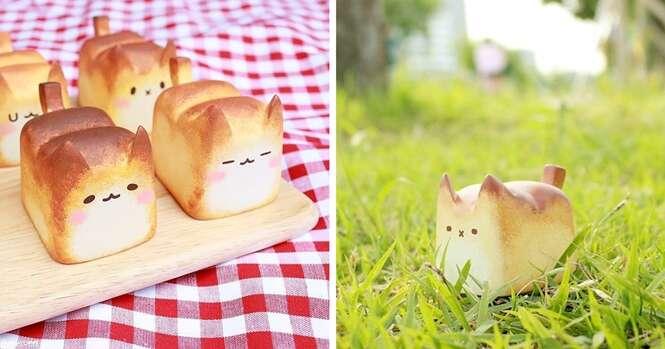 PãoGato: o alimento mais fofo que você já viu