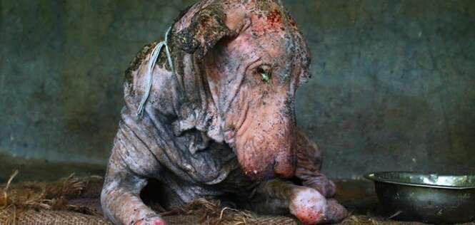 Cão resgatado das ruas prova que amor e cuidados fazem milagres