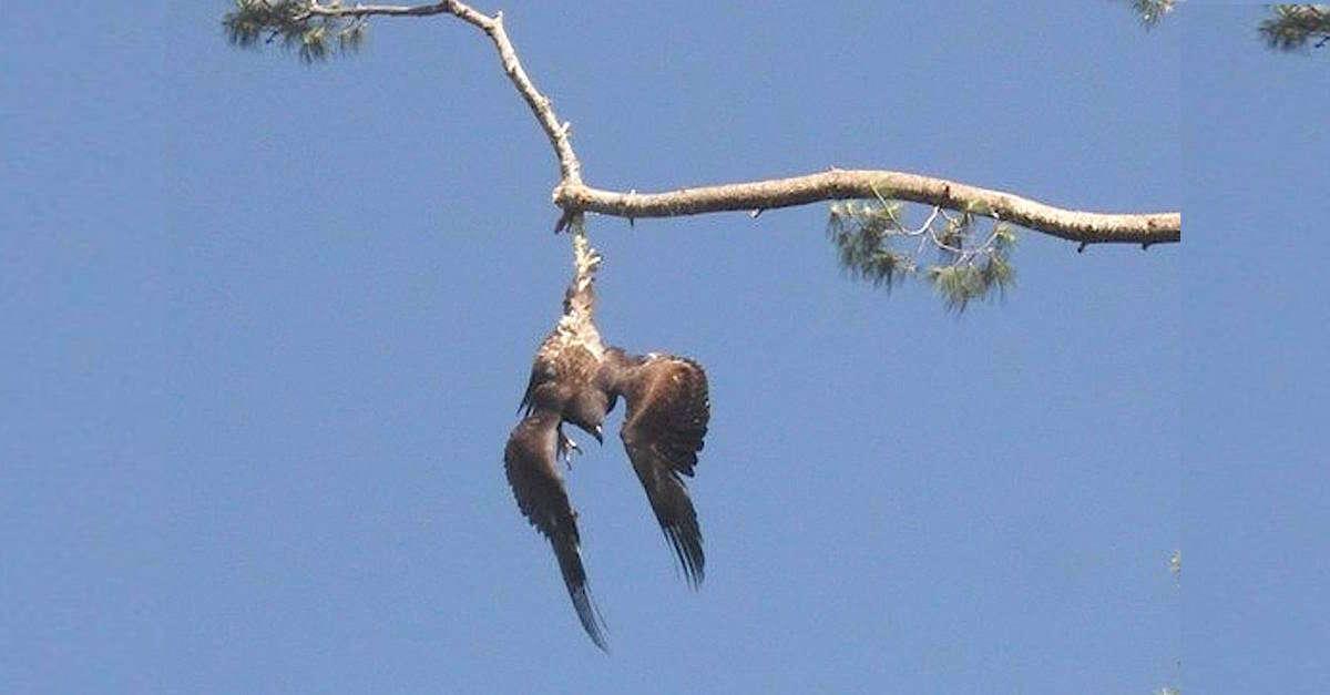 Homem salva águia presa em galho de árvore
