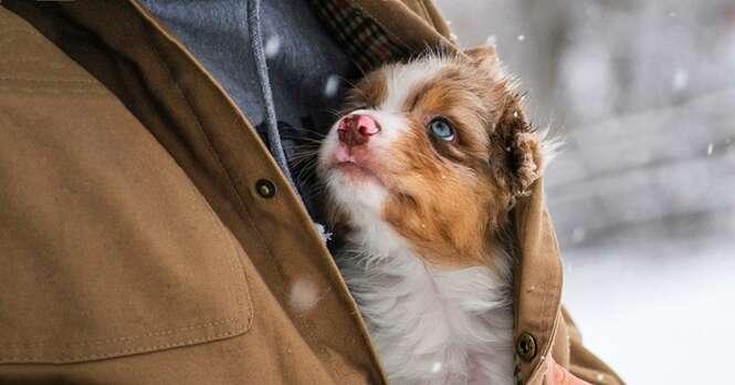 Nós precisamos urgentemente ser a pessoa que nossos cães pensam que somos