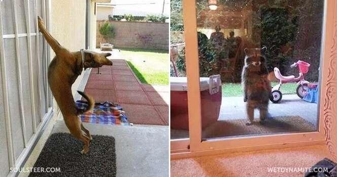 Animais hiper ansiosos pra entrar em casa