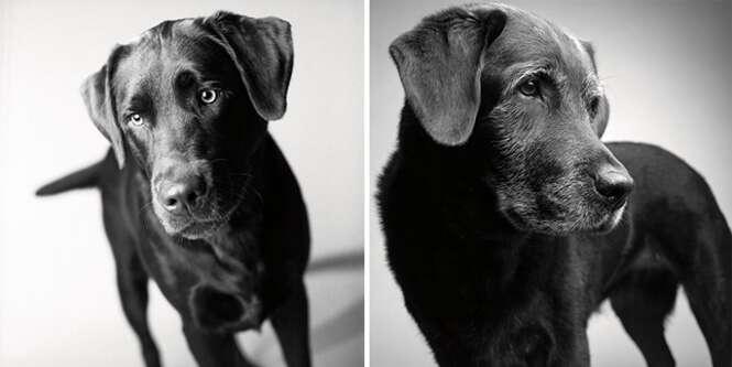 Foto: © Dog Years