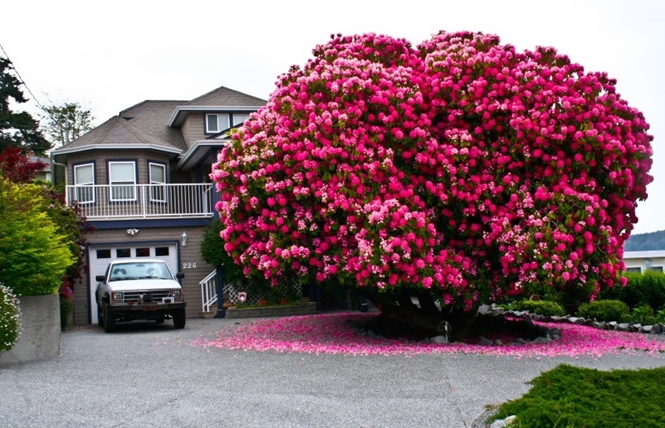 As 16 árvores mais belas do mundo