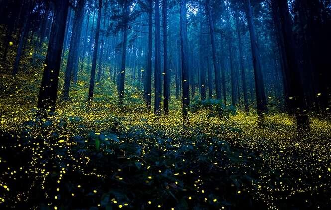 Fotos fantásticas de vagalumes em florestas japonesas