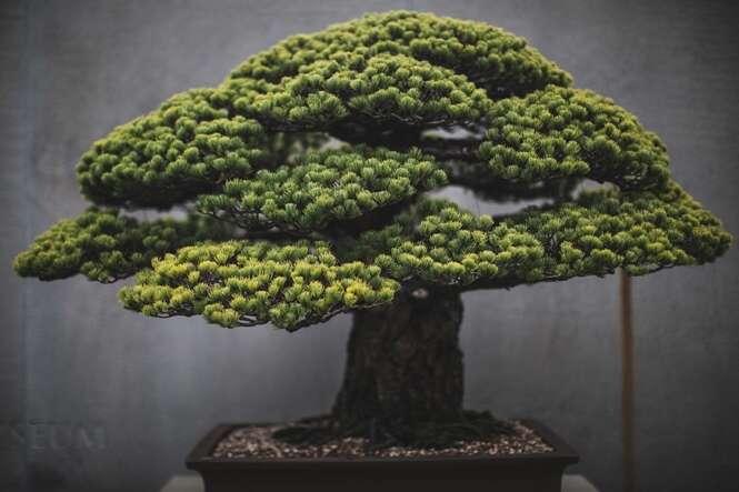 Fotógrafo dedica dois anos de sua vida retratando a beleza de árvores Bonsai