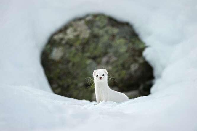 Fotografia: Inverno branco