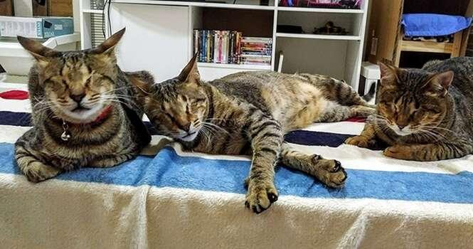 Conheça a história destes 3 gatos cegos que ninguém queria adotar
