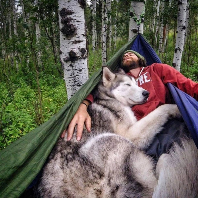 Foto: ©loki_the_wolfdog