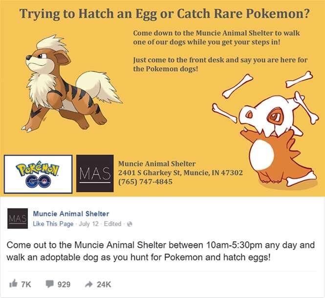 Abrigo de animais aproveita Pokémon Go para ajudar a adotar cães abandonados