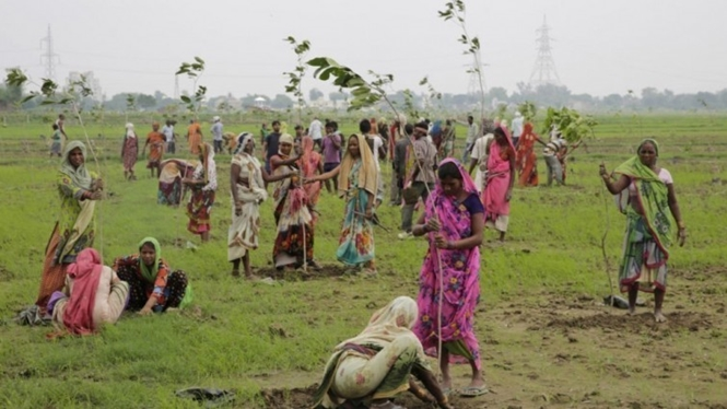 Índia planta 50 milhões de árvores em um dia e bate recorde mundial