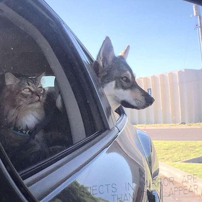 Cadela vai a abrigo de animais e escolhe seu próprio gatinho para levar para casa