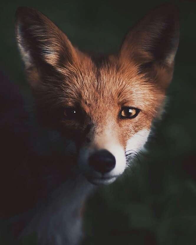 Fotógrafo captura a alma das florestas com fotos incríveis de animais