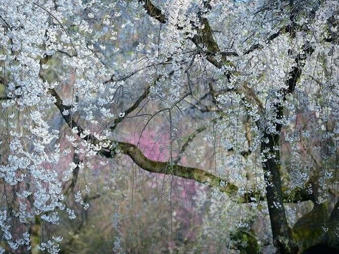 Fotografia: Yukio Miki