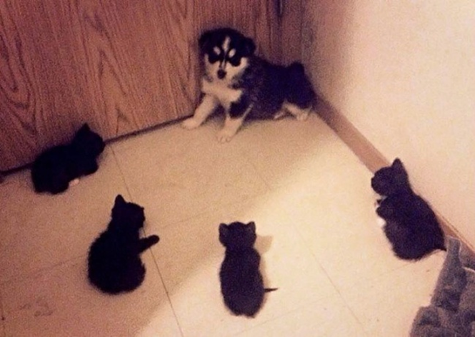 Foto: dog-time