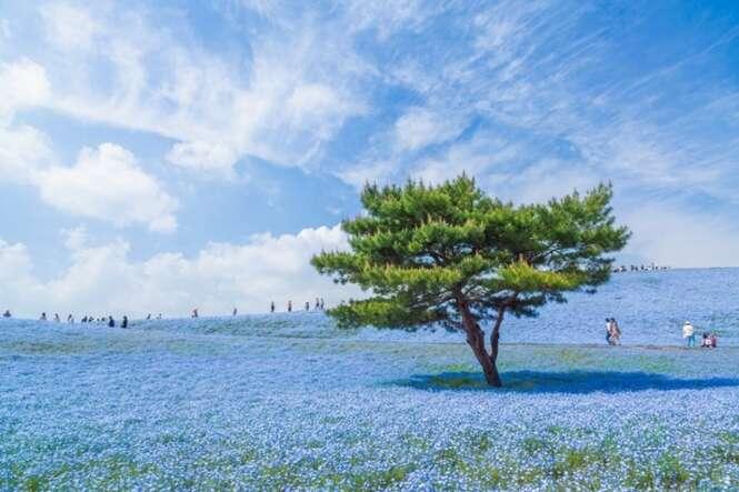Foto: © Hiroki Kondu - National Geographic