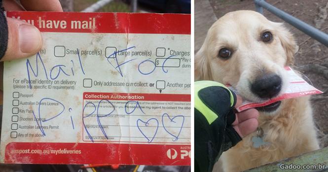 Carteiro escreve cartas para residência quando não há correspondência apenas para fazer cão feliz