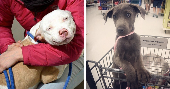 Cães no primeiro dia após serem adotados