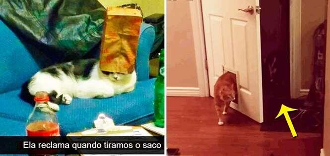 Coisas que só os gatos poderiam pensar em fazer