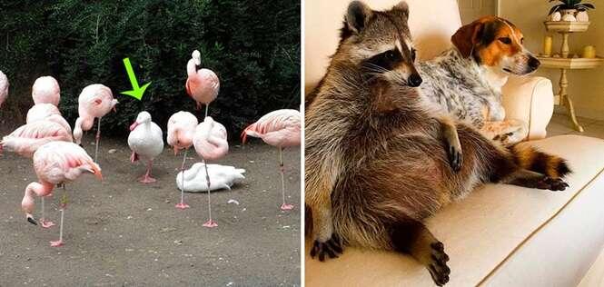 Animais que estão lidando com uma profunda crise de identidade