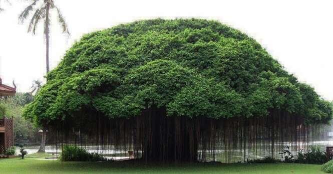 Árvores impressionantes que parecem ser de outro mundo