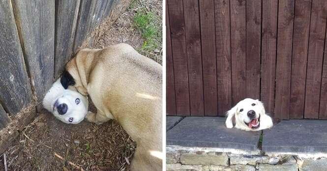 """Cães desesperados que querem apenas dizer um """"oi"""""""