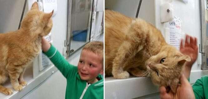Menino vai adotar outro gato e reencontra animal perdido 18 meses antes