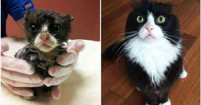 Gatos antes e depois da adoção