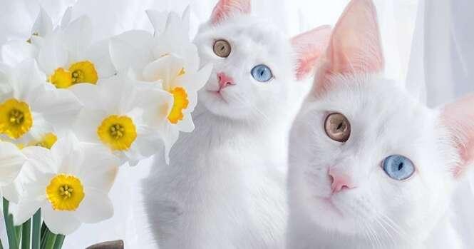 Conheça os gatinhos mais bonitos do mundo