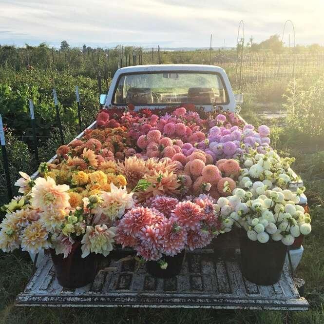 Usuários do Instagram estão obcecados com essas flores na carroceria de caminhão