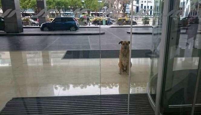 Cão espera aeromoça na porta de aeroporto durante 2 meses