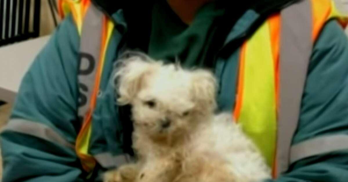 Catadora encontra cão abandonado ao ver saco de lixo se movimentando
