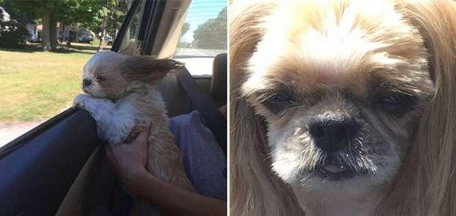 Ele tentou economizar na tosa do cão, e quem sofreu foi o pobre animal