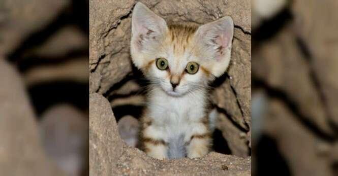 Estranho gato é capturado pelas lentes de uma câmera