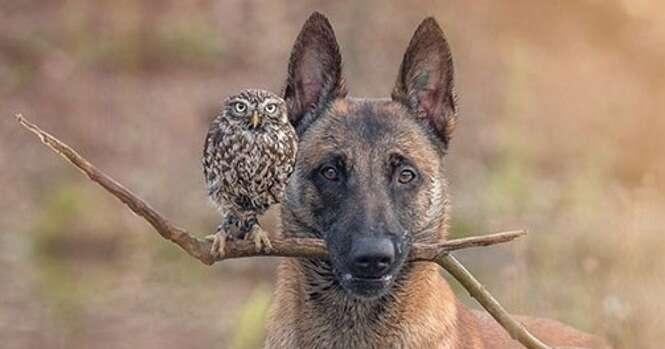 Um cão e uma coruja se tornaram melhores amigos