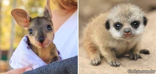 Fofos animais recém-nascidos que farão seu dia ser mais feliz