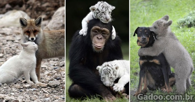 Imagens revelando amizades improváveis pelo mundo