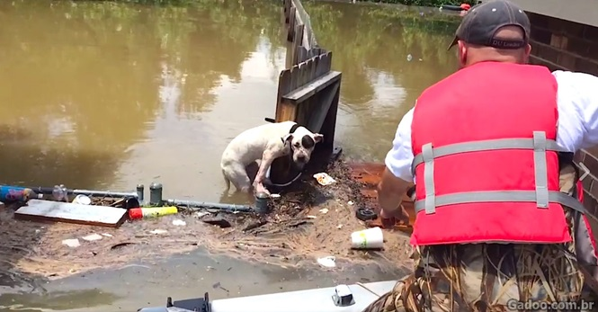 Homens resgatam dois pit bulls em enchente