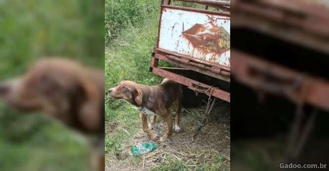 Cão é resgatado após passar 10 dias preso em reboque velho
