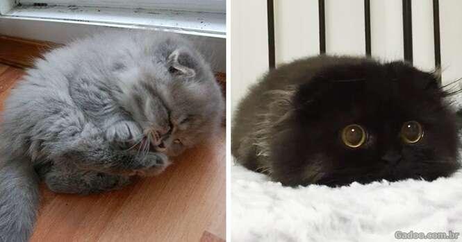 Os gatinhos mais lindos e fofos que você já viu