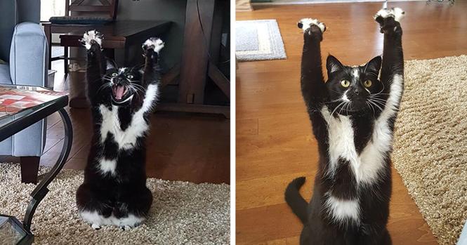 Este gato se mantém com as patas para o ar, e ninguém sabe o porquê