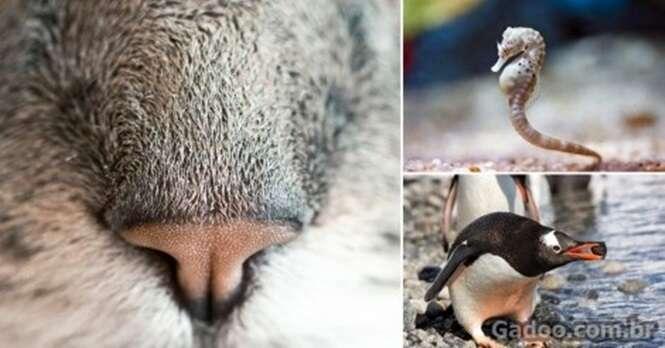 Fatos curiosos e esquisitos do mundo animal
