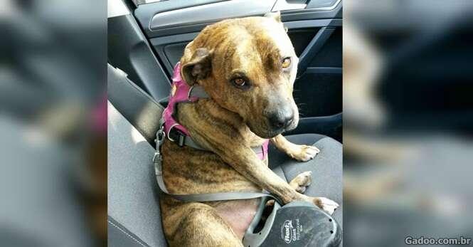 Cão de abrigo recusado 18 mil vezes ganha papel em Hollywood