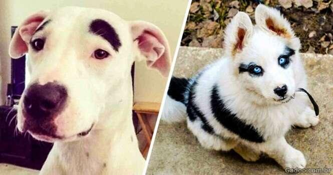 Cães que só podem ter sido desenhados pela mãe natureza