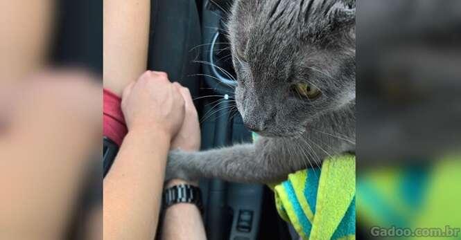 Gato prestes a ser sacrificado conforta dona