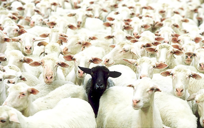 Sinais que você é a ovelha negra da família