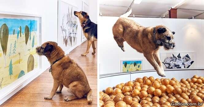 Essa é a primeira exposição de arte do mundo feita para cães