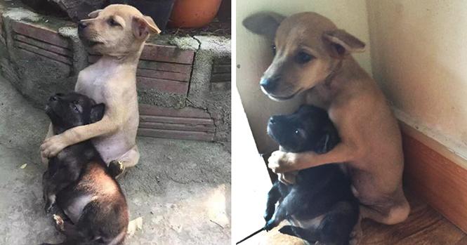Estes cães de rua não pararam de se abraçar após serem adotados